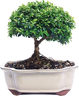 Best bonsai tree names Reviews
