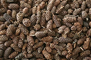 pine cones wholesale suppliers