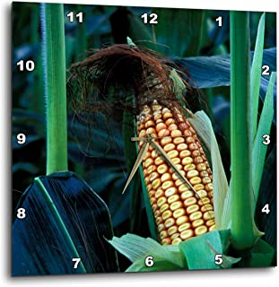 3dRose dpp_95031_2 Vermont, Woodstock. Corn Cob Stalk, Agriculture-Us46 Mpe0026-Marilyn Parver-Wall Clock, 13 by 13-Inch