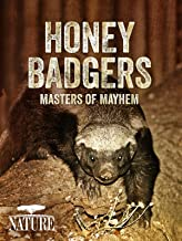 documentary honey badger