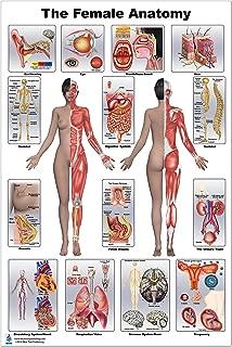 Female Anatomy Poster 12x17