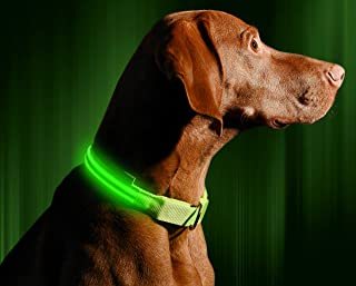 Illumiseen LED Dog Collar - USB Rechargeable - Available in 6 Colors & 6 Sizes - Makes Your Dog Visible, Safe & Seen