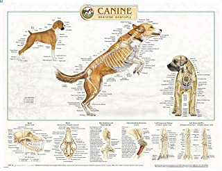 a dog's anatomy poster