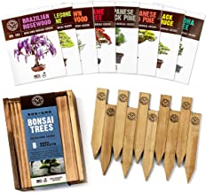 Bonsai Tree Seeds Kit - 8 Popular Varieties of Non GMO Mini Bonsai Trees + Bamboo Plant Markers, Wood Gift Box, Grow Bonzai eBook - Bonzie Tree Seed Starter Kits, Indoor Garden, Gardening Gifts Idea