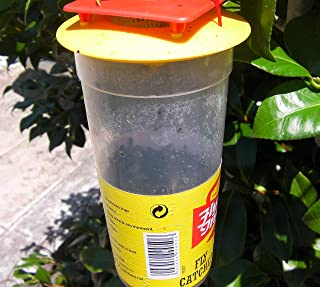 Redtop Flycatcher Cup Trap - 100% Non-Toxic Disposable Outdoor Fly Trap - Designed to Attract Egg-Laying Females (4)