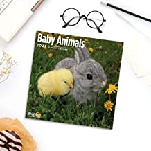 2021 Baby Animals Wall Calendar by Bright Day, 12 x 12 Inch, Cute Furry Critters