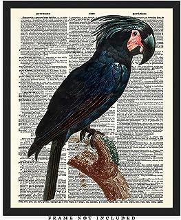 Goliath Cockatoo Dictionary Wall Art Print: Unique Room Decor - (8x10) Unframed Picture - Great Gift Idea Under $15