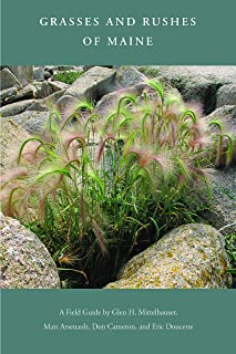 Grasses and Rushes of Maine