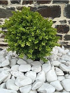Amazon.fr : gravier blanc jardin : Jardin