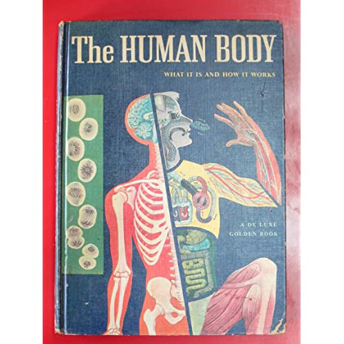 The Human Body: What It Is and How It Works