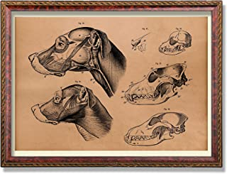 Vintage Anatomy art print Dog head illustration Animal poster
