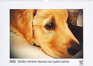 Golden retriever douceur sur quatre pattes 2020 - Édition blanche - Calendrier mural Timokrates, calendrier photo, calendrier photo - DIN A3 (42 x 30 cm)
