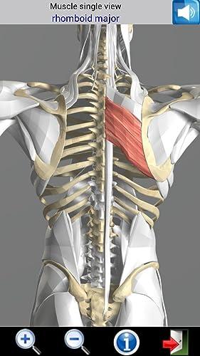 『Visual Muscles 3D』の6枚目の画像