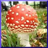 Nature And Mushrooms Puzzle