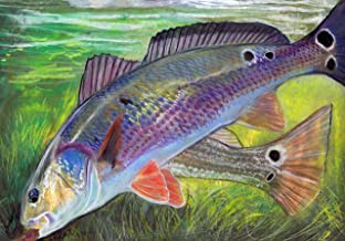 redfish art prints
