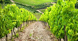 Wine-Tasting Experience in Beautiful Tuscany for Two - Tinggly Voucher/Gift Card in a Gift Box