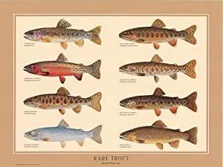 Rare Native Trout Fish Poster and Identification Chart