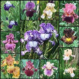2 Stunning Iris Bulb Double Petals Colorful Flower Decor Home Garden Bonsai Gift