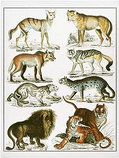 Bilderwelten Pizarra magnética - Vintage Board Lion, Tiger and Jackal 40x30cm