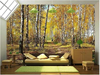 wall26 - Birch Grove in Autumn Forest - Removable Wall Mural   Self-Adhesive Large Wallpaper - 100x144 inches