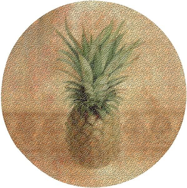 Thirstystone Pineapple Cork Coaster Set