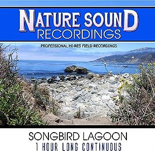 Songbird Lagoon - 1 Hour Long Continuous