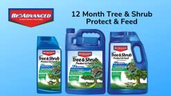 Amazon Com Bioadvanced 701525a Month Tree And Shrub Insect Control 1 Gal Concentrate Garden Outdoor