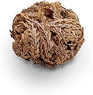 Luchea's Psychic World Herbs-Rose of Jericho-Whole