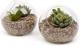 6 Inch Glass Ball Terrarium, Tabletop Air Plant Display Globe, Set of 2