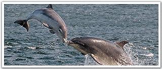 """ملصق جداري قابل للإزالة من JP London PAN5199 uStrip Dolphins Swim Swim Wildlife - 48"""" عرض في 20"""" High"""