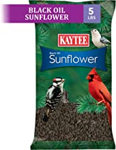Kaytee Wild Bird Food Black Oil Sunflower - 5 Lb