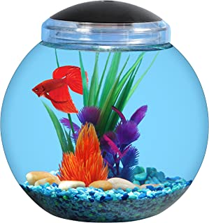aqua culture 1 gallon fish bowl