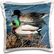 3dRose Mallard Duck Couple - Pillow Case, 16 by 16-inch (pc_11549_1)