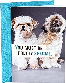 Hallmark Shoebox Funny Birthday Card (Shih Tzu Puppies)
