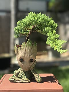bonsai tree sprout