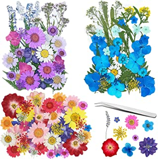 Frasheng 120Pcs Fleurs Sechees Naturelles,Vraies Fleurs pressées séchées,Avec une pince à épiler,Fleurs séchées pour Rési...
