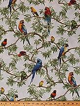 Cotton Parrots Lovebirds Macaws Birds Bird Jungle Animals Wildlife Nature Born Free Cotton Fabric Print by The Yard (D474.39)