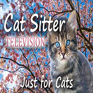 Cat Sitter Television - For Cats Only