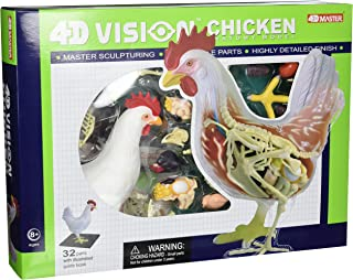 Tedco 4D Vision Chicken Anatomy Model