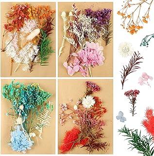 Auihiay 4 Pack Vraies Fleurs Séchées Multicolore Fleurs Pressées Feuilles Pétales pour Artisanat Résine Bijoux Scrapbookin...