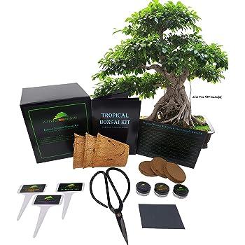 Amazon Com Tropical Indoor Outdoor Bonsai Seed Kit Tropical Level 1 Garden Outdoor
