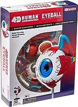 Tedco Human Anatomy - Eyeball Anatomy Model