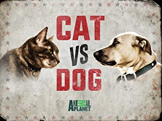 dogs vs cats animal planet