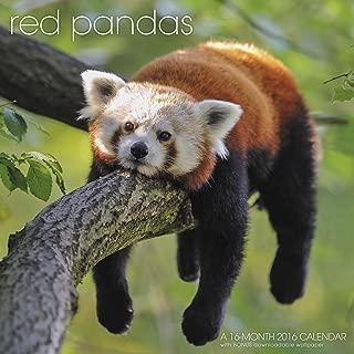 Red Pandas Wall Calendar (2016)