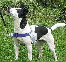 Amazon.es: arnes para perros antitirones