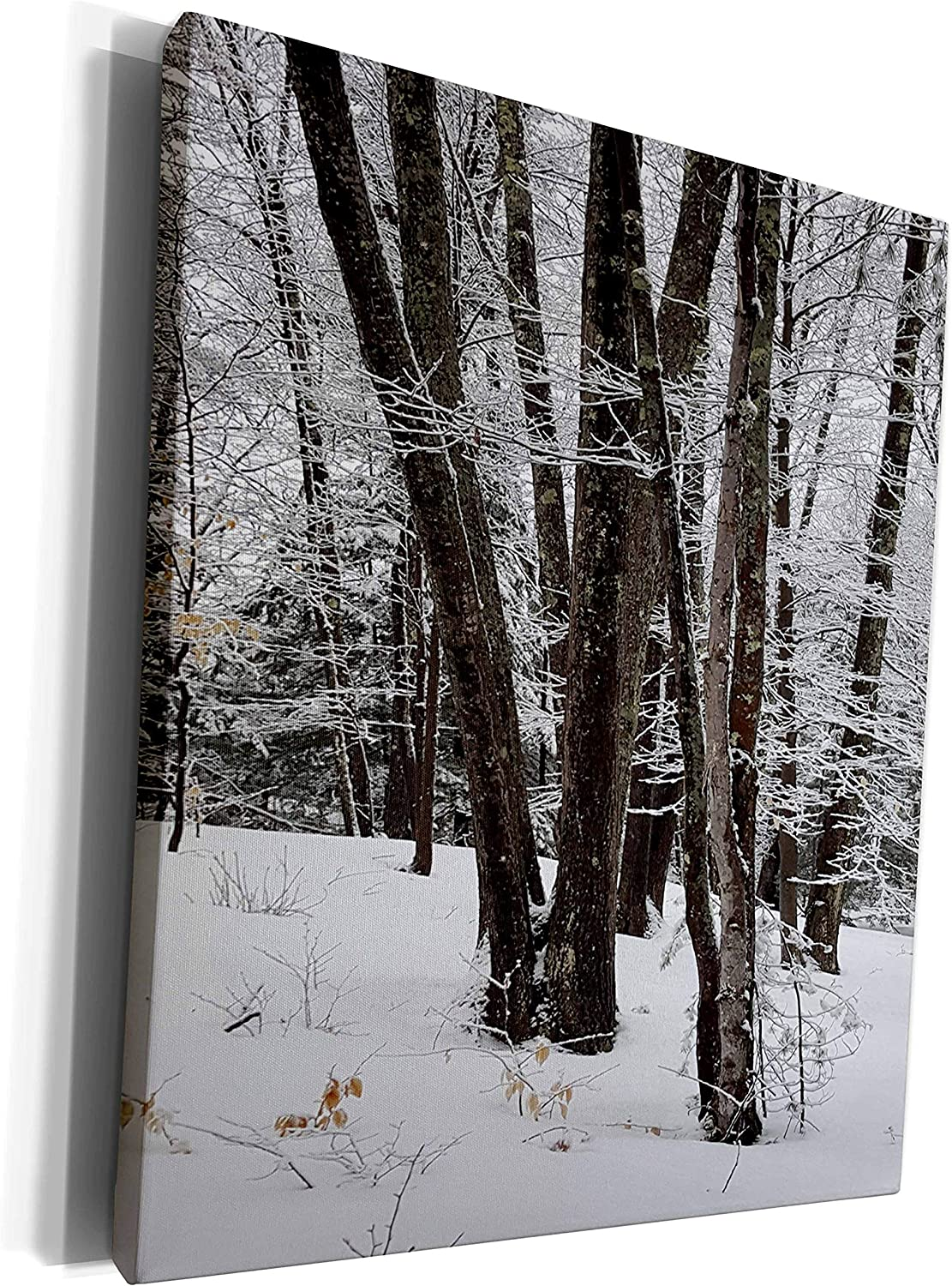 Credence 3dRose TDSwhite – Winter Seasonal - Photos Nature Picture