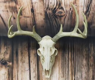 Ebros Gift Rustic Hunter Deer 10 Point Buck Skull Trophy Antlers Wall Mounted Plaque Trophy Decor Figurine 14.25