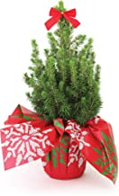 """Burpee Live Tabletop Christmas Tree with Red Bow 