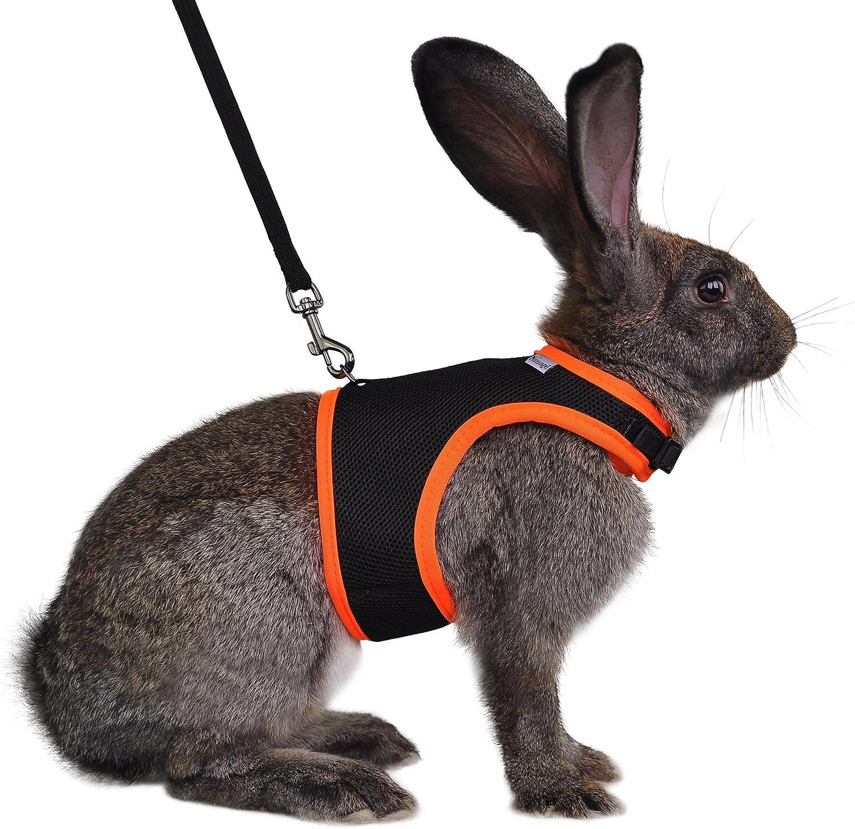 Niteangel Adjustable Soft Harness with Elastic Leash for Rabbits (M, Black)