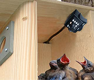 Birdhouse Spy Cam BCAMHEHD Hawk Eye HD Camera (Set of 1)